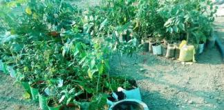 गच्चीवरील मातीविरहीत बाग