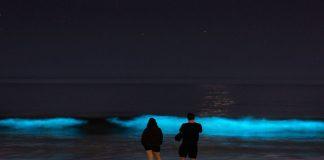 bioluminescence बायोलुमीनीसन्स म्हणजे काय