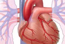 जाणून घ्या हृदयातील ब्लॉकेज ची लक्षणे कारणे घरगुती उपाय आणि पथ्ये