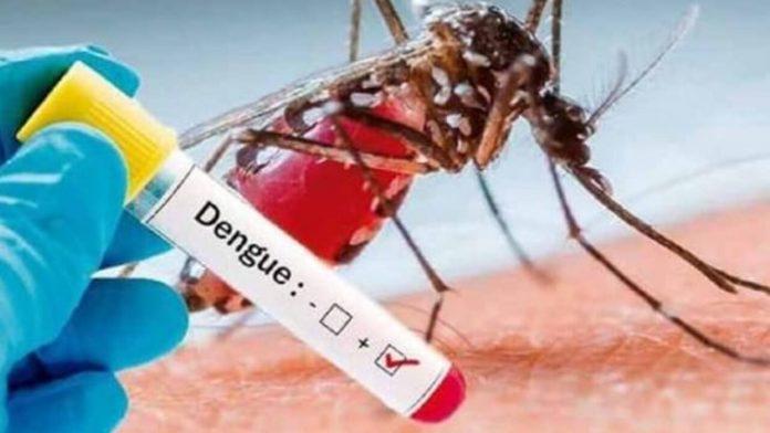 डेंग्यूची लक्षणे टायफॉईड ची लक्षणे व उपाय डेंगू वर उपाय मराठी डेंग्यूचे प्रकार